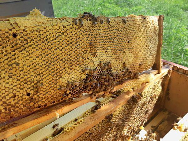 Kennohunaja, Hunajakenno, Honeycomb