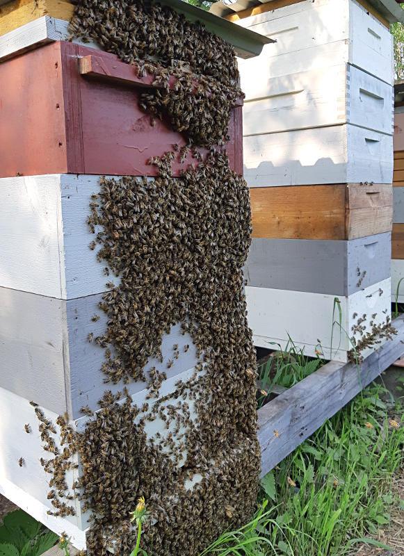 Mehiläistarhaus mehiläispesä
