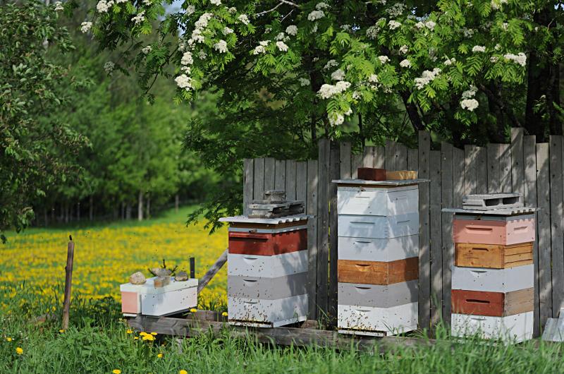mehiläispesä mehiläistarha