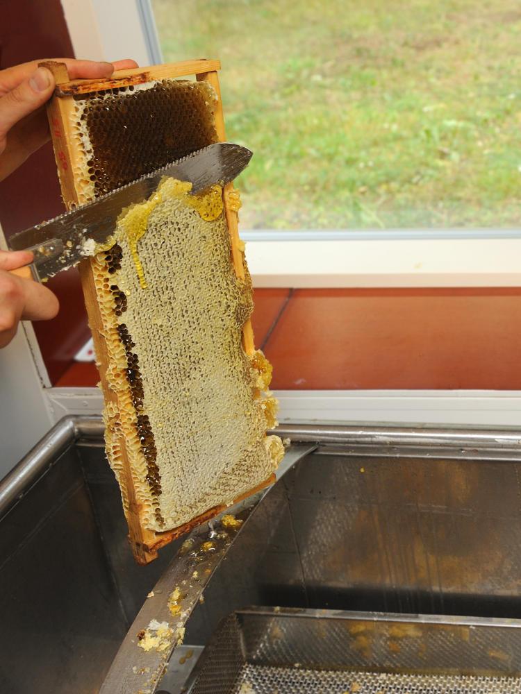 Hunajakennon kuorintaa veitsellä