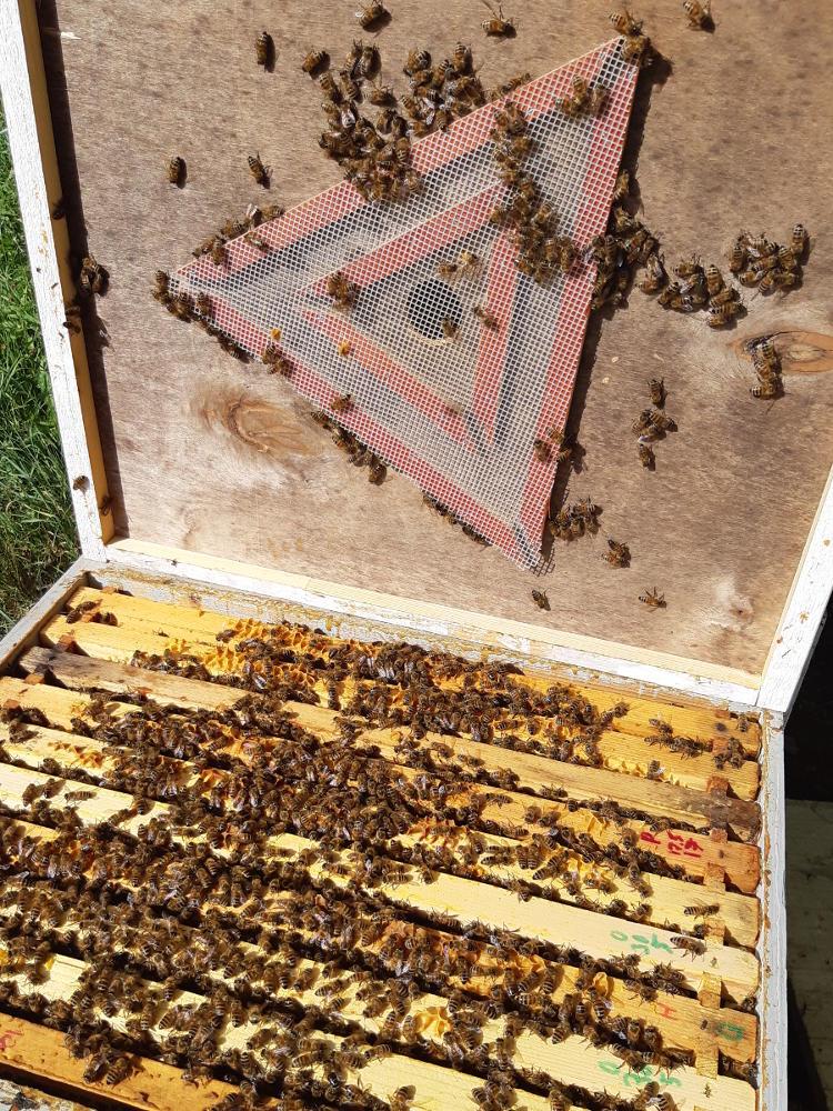 Mehiläispesä ja mehiläispako